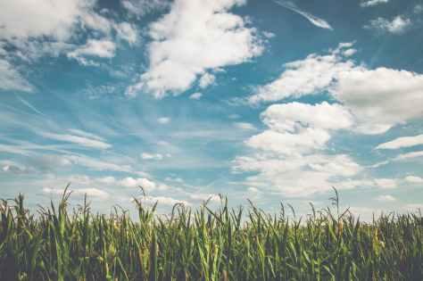 field-corn-air-frisch-158827.jpeg