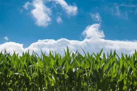 nature-sky-sunny-clouds.jpg